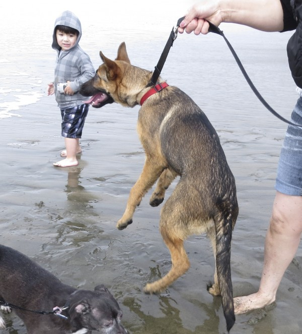 German Shepherd and Girl on Beach
