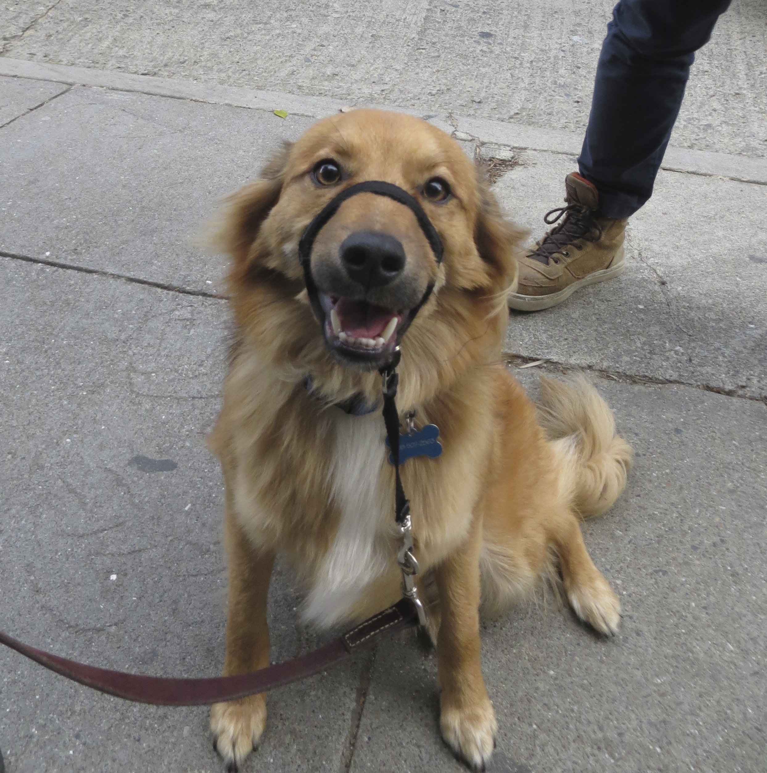I M Gonna Help Everyone The Dogs Of San Franciscothe Dogs Of San