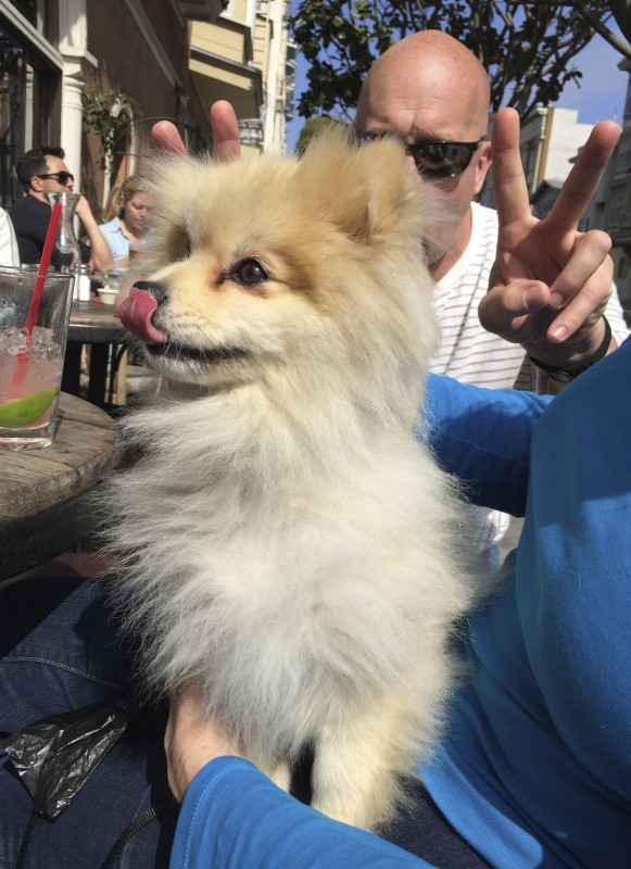 Smiling Pomeranian And Guy Holding Up Fingers