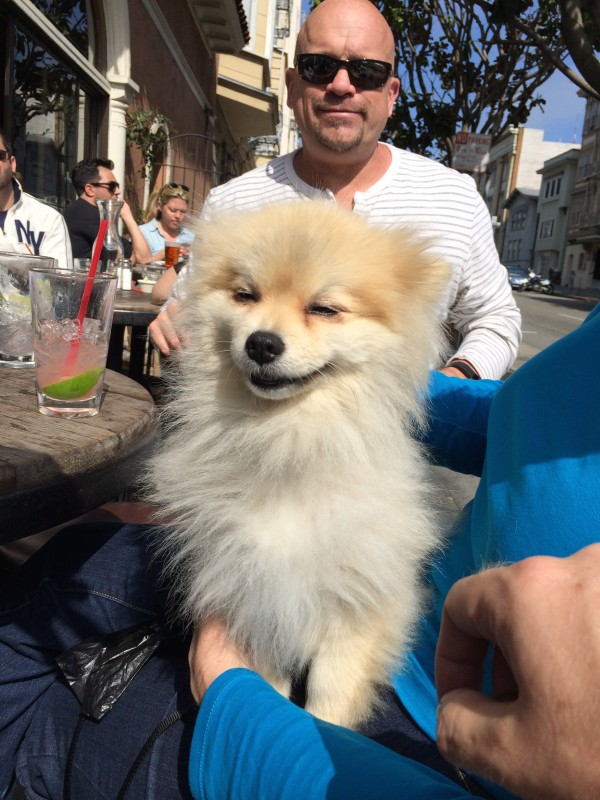 Smiling Pomeranian With Bald Man Behind Her
