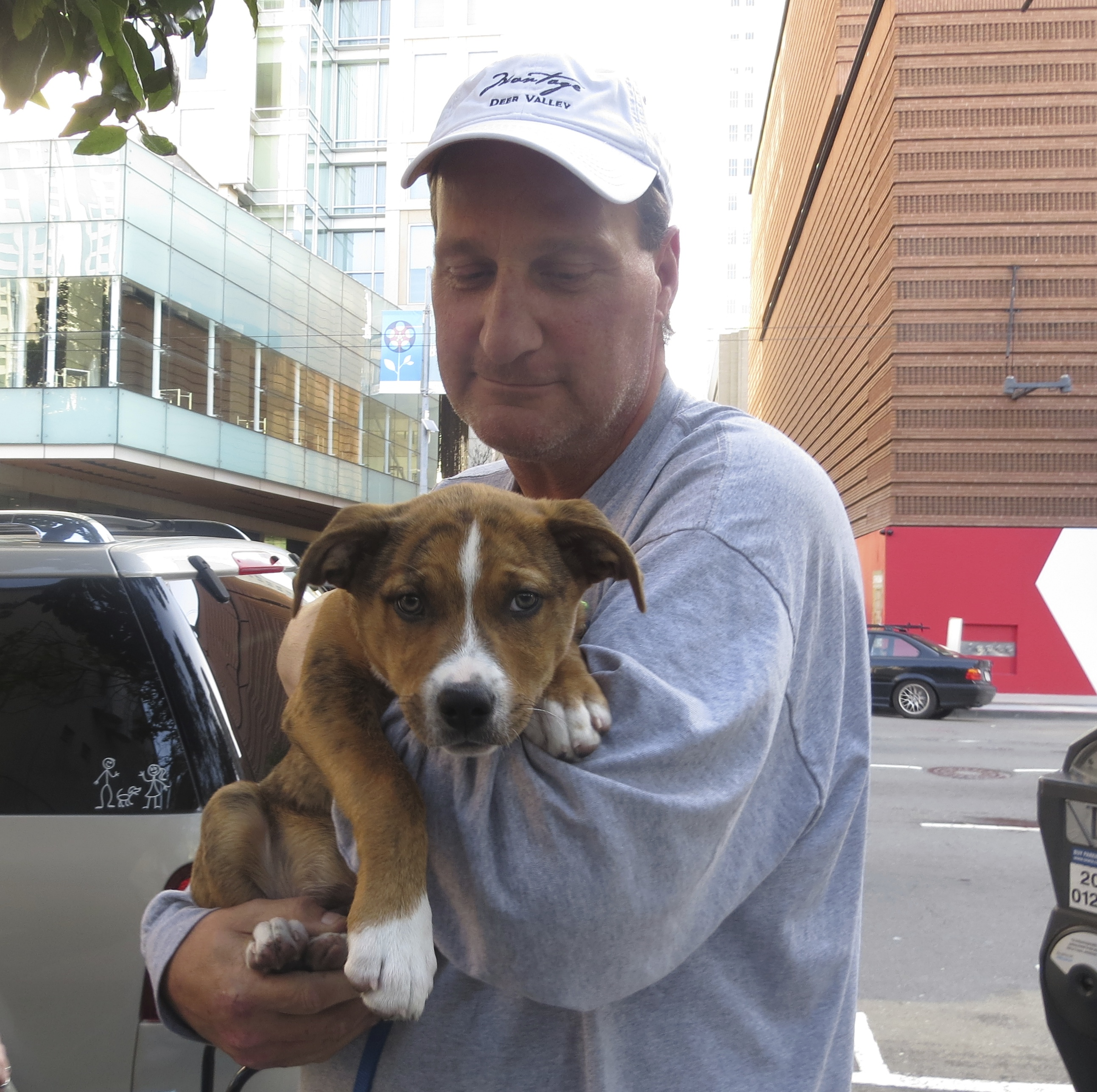 Man Holding Brindle and White American Pit Bull Terrier/Border Collie Mix Puppy