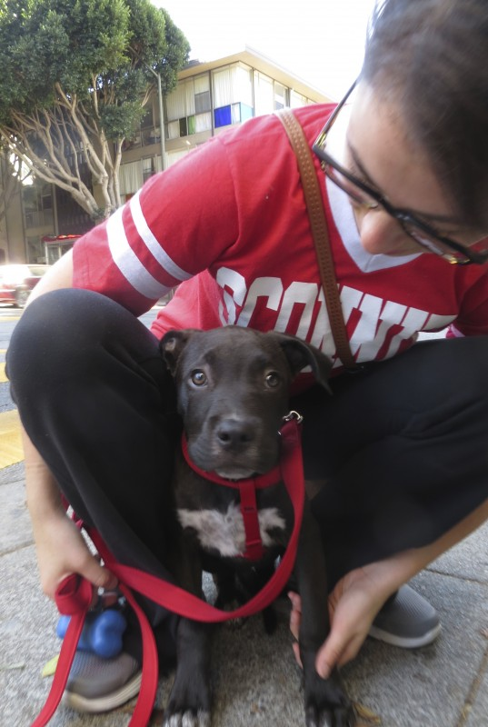 Woman Squatting With Pit Bull/Labrador Puppy Between Her Knees