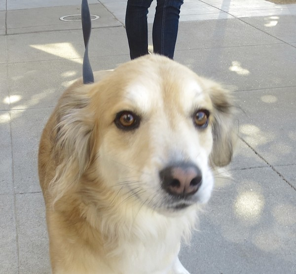 Tan-and-White Guatemalan Street Dog With Half-Red and Half-Black Nose