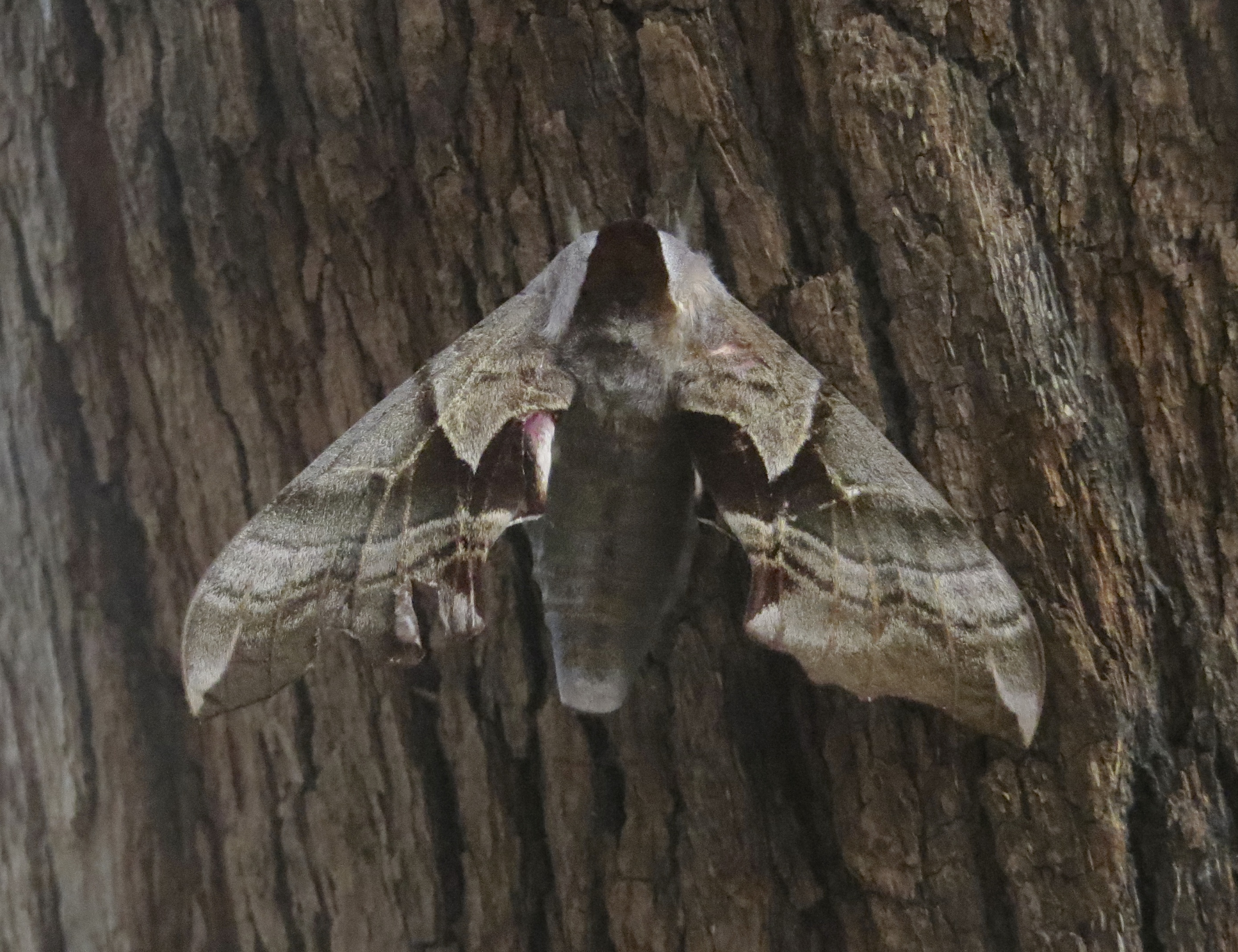 Some Kind Of Moth, I Don't Know, What?