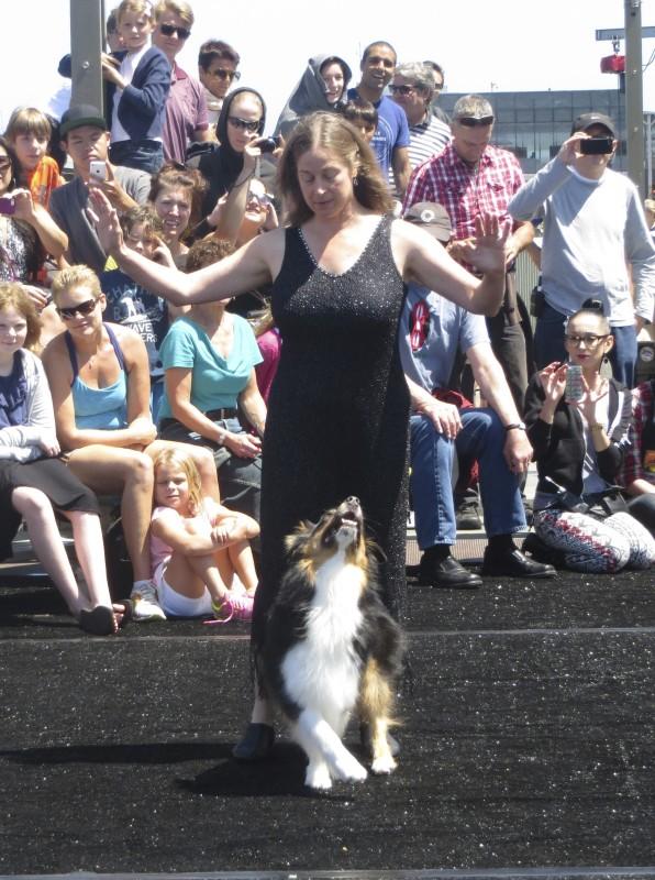 Tricolor Australian Shepherd Dancing With Woman