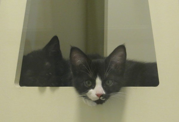 Two Kittens In A Fort