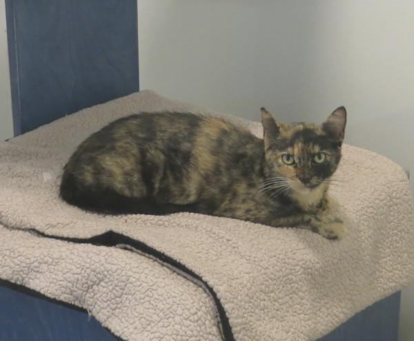 Calico Cat Sitting On Beige Fleece