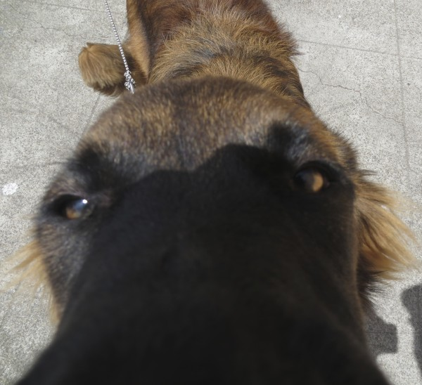 ...the dreaded 'dognose all up in your bidnezz' shot...