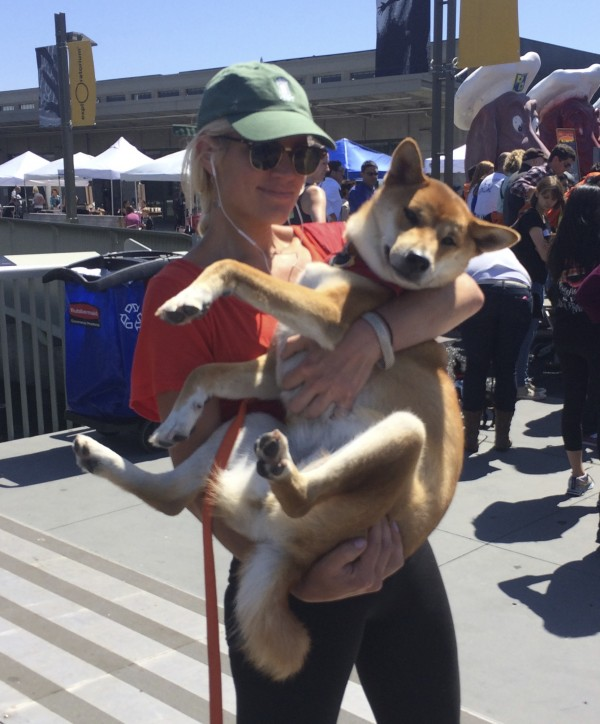 Woman Holding Very Large Shiba Inu In Her Arms