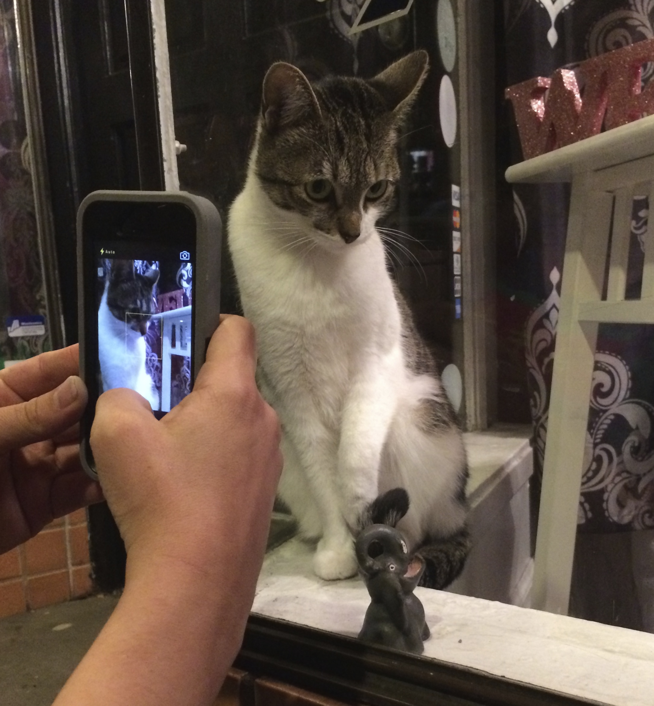 iPhone Taking Picture of Cat In Window