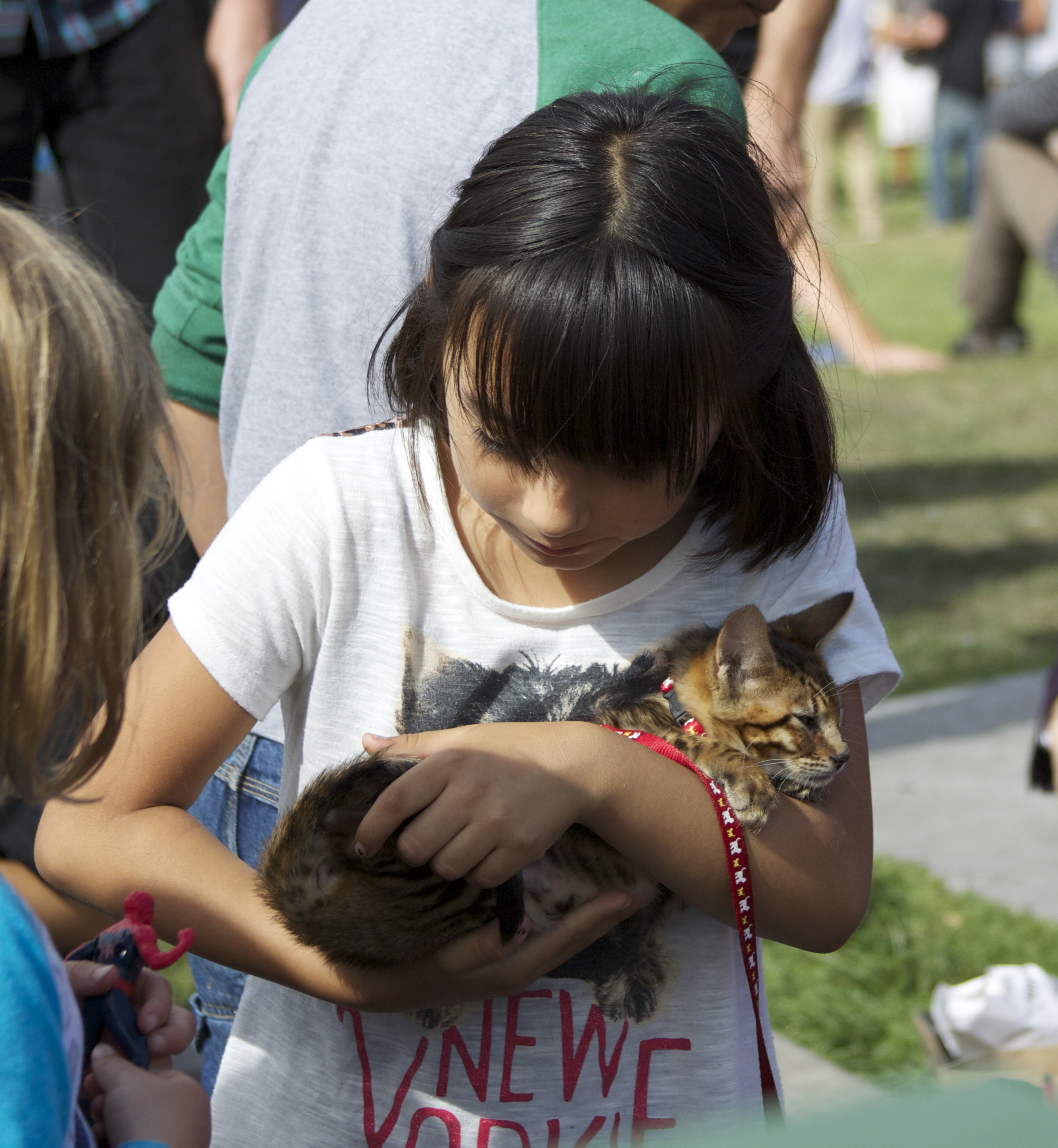 Little Girl Holding Tiger Tabby Kitten