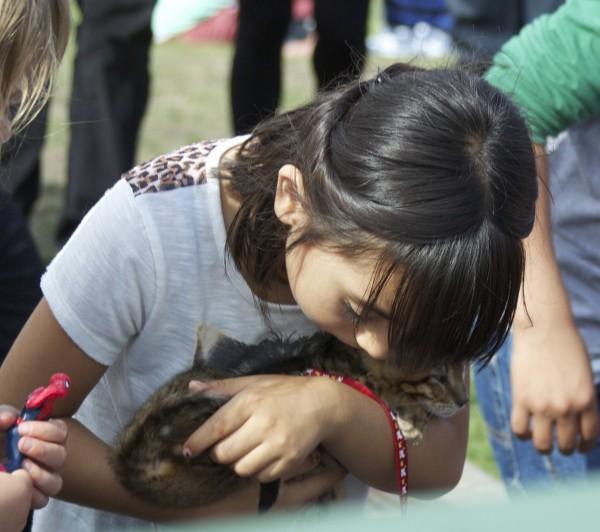 Adorable Little Girl Kissing A Tiger Tabby Kitten