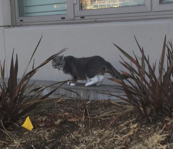 Grey And White Kitty Saying Goodbye