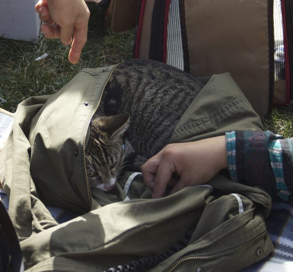 Cat Curled Up In Someone's Jacket