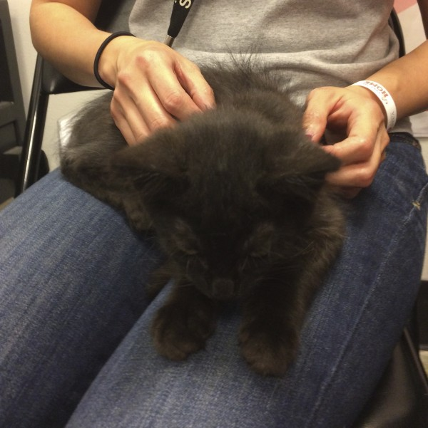 Black Kitten Being Held In Woman's Lap And Petted