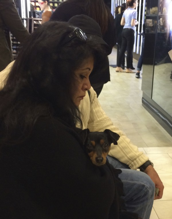 Woman Holding Black-And-Tan Miniature Dachshund Mix Puppy