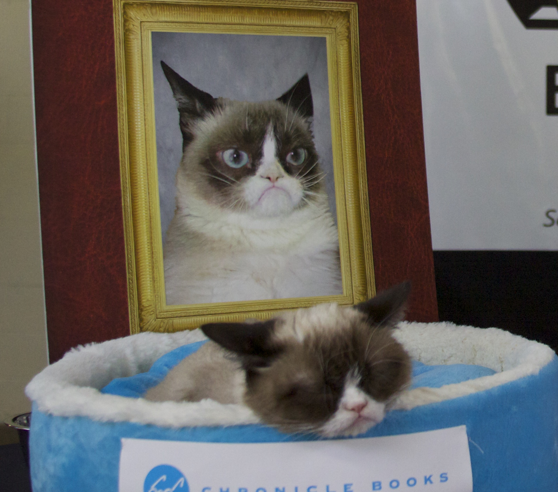 Grumpy Cat Sleeping In Front Of A Photograph Of Herself