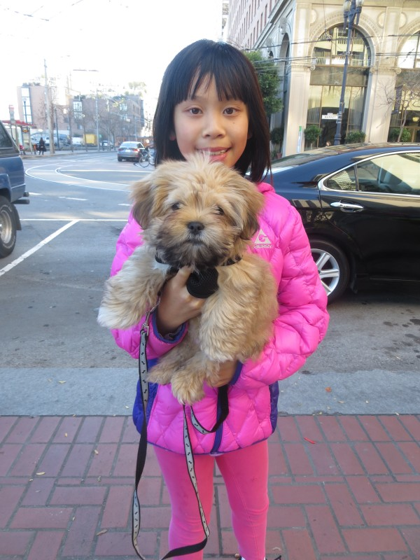 Small Girl Holding Shih Tzu Pomeranian Mix Puppy