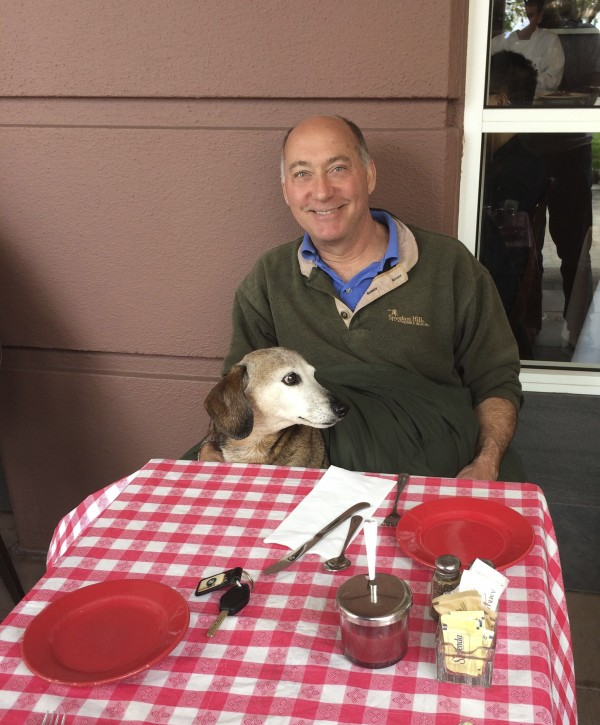 Older Standard Dachshund Sitting In Man's Lap At Restaurant