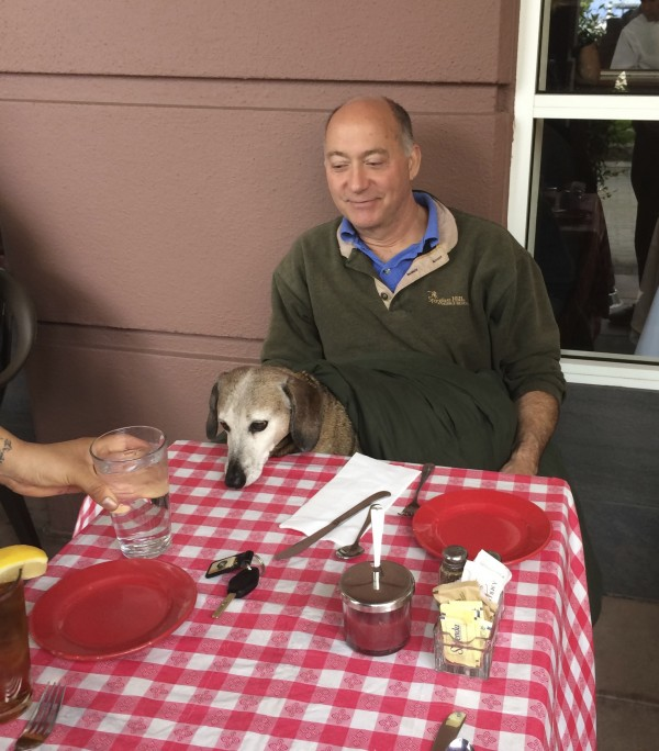 Older Standard Dachshund Sitting In Man's Lap At Restaurant And Gazing At A Glass Of Water