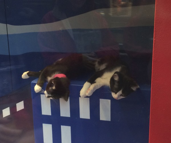 Two Tuxedo Kittens Lying Next To One Another
