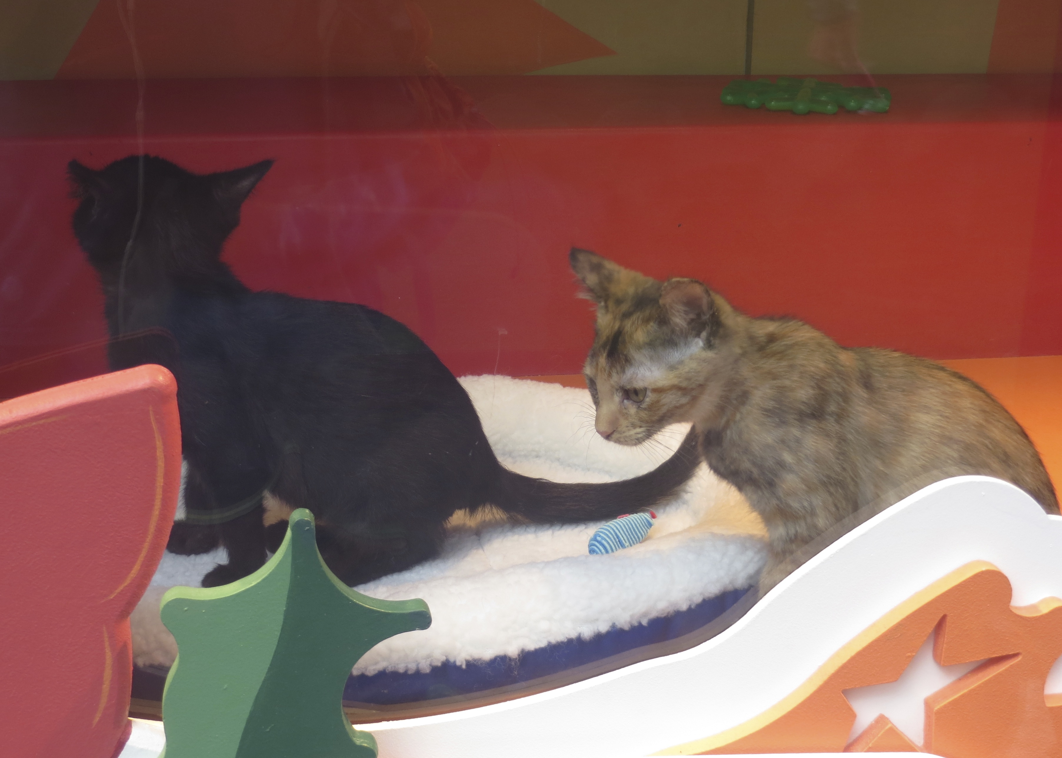 Black Kitten And Tortoiseshell Kitten