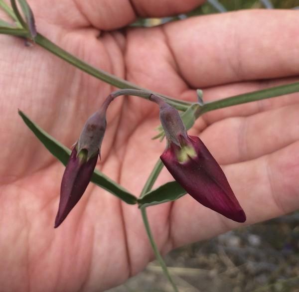 Hand Holding Purple Wildflowers