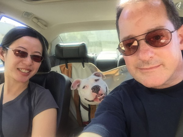 Man, Woman, And White Pit Bull Who Is Looking Ridiculously Happy
