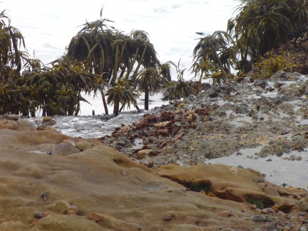 Seaweed That Looks Like Trees On A Beach