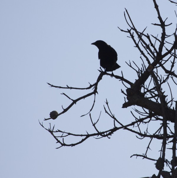 Silhouette Of Bird Perched On Dead Twig
