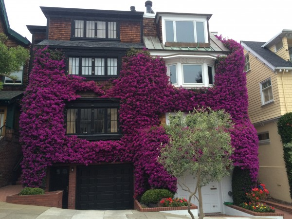 Bougainvillea-Covered House On UnIon Street In Cow Hollow, San Francisco