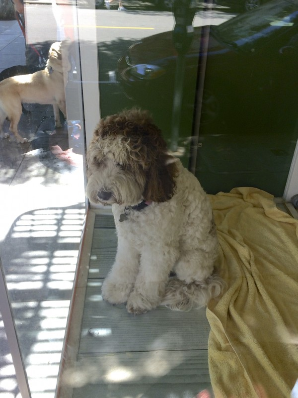 Dog In A Shop Window Looking Sad While Dogs Play Outside