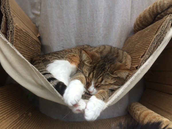 Cat Sleeping In A Hammock Lined With Corrugated Cardboard