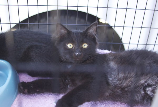 Two Black Cats In A Cage