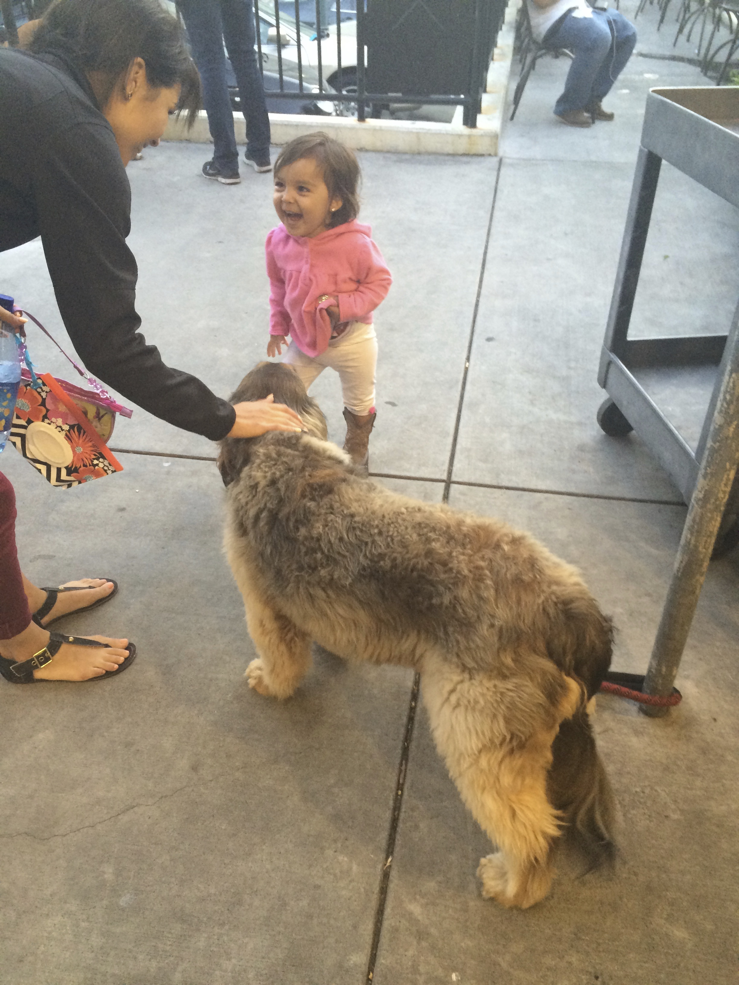 Little Girl Delightedly Greeting Unknown Mixed-Breed Dog