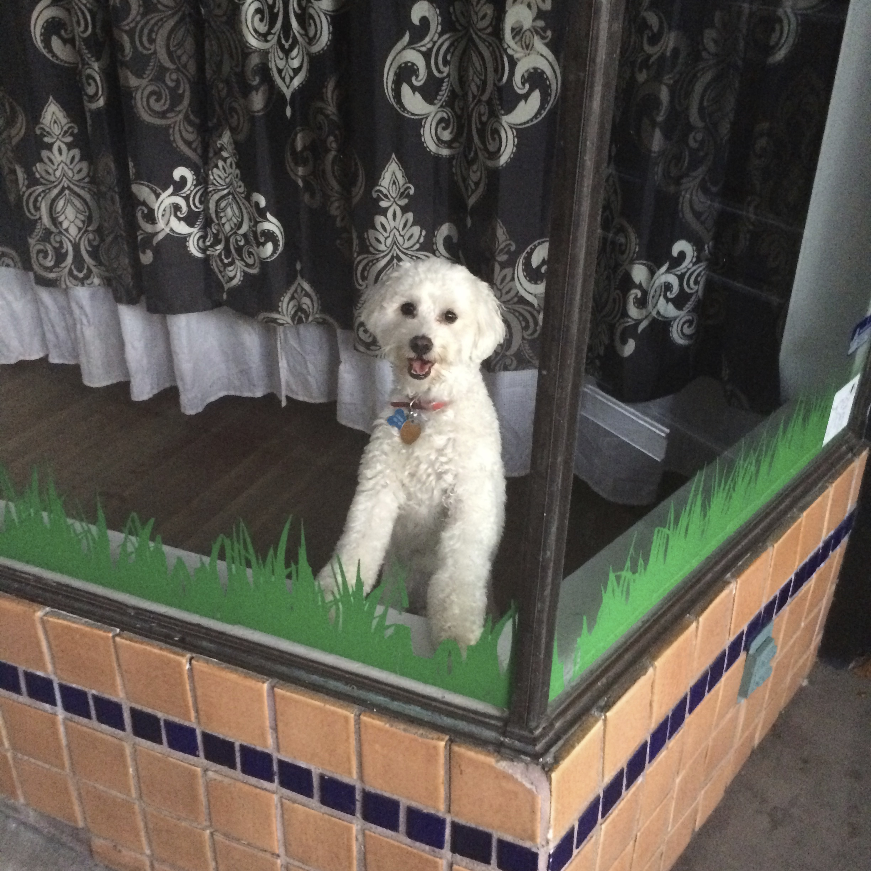 White Dog In Window