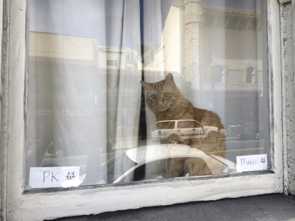 Marmalade Tabby Cat Sitting In A Window With Reflections On It