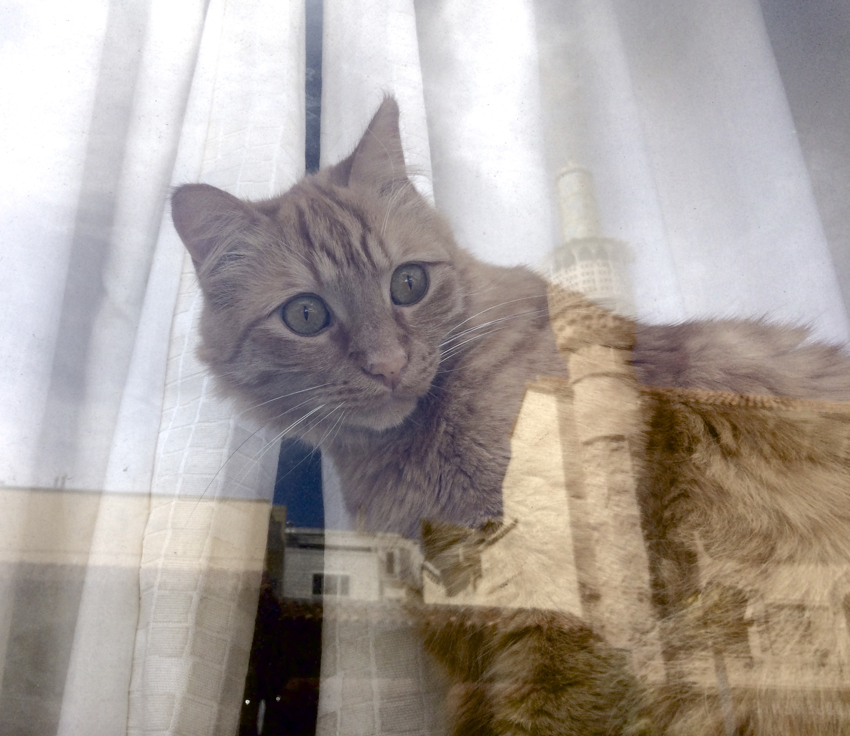 Marmalade Tabby Cat In Window With Weird Reflections