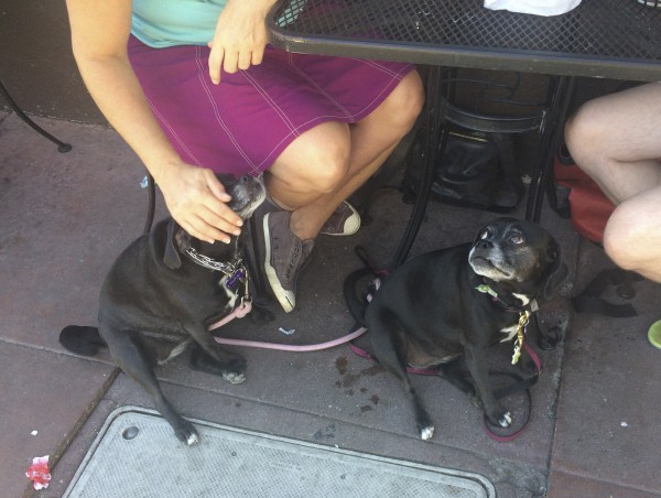 Two Black Puggles Under A Cafe Table