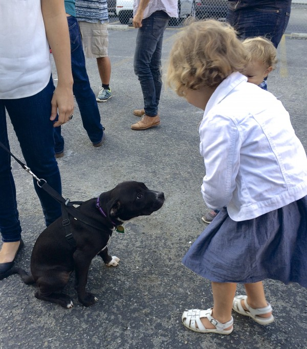 Little Girl And Little Boy Meeting Black Pit Bull Labrador Retriever Mix Puppy