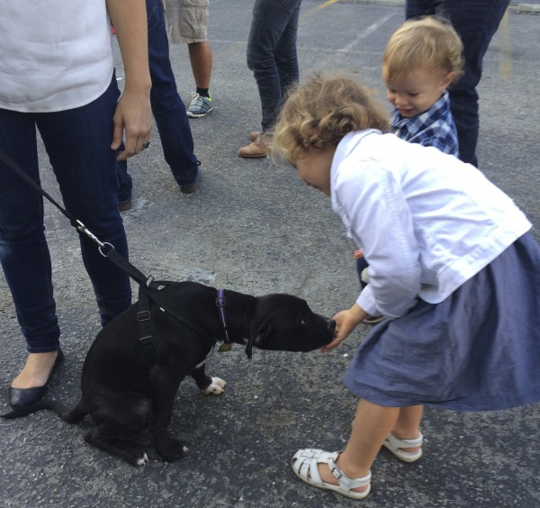 Black Pit Bull Labrador Retriever Mix Puppy Licking Little Girl's Hand