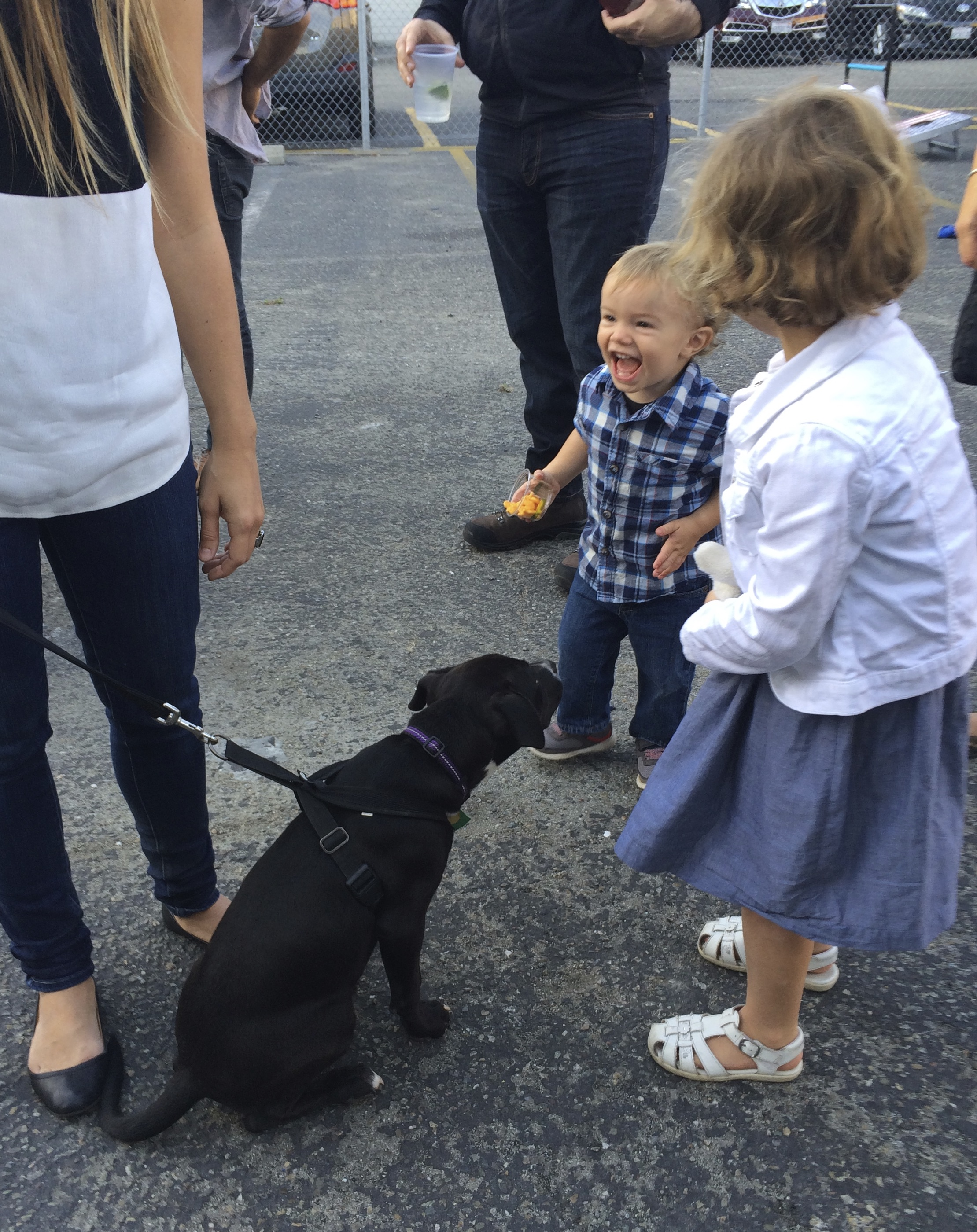 Toddler Laughing At Black Pit Bull Labrador Retriever Mix Puppy