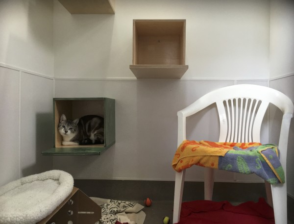 Cat Lounging In Box Mounted To Wall