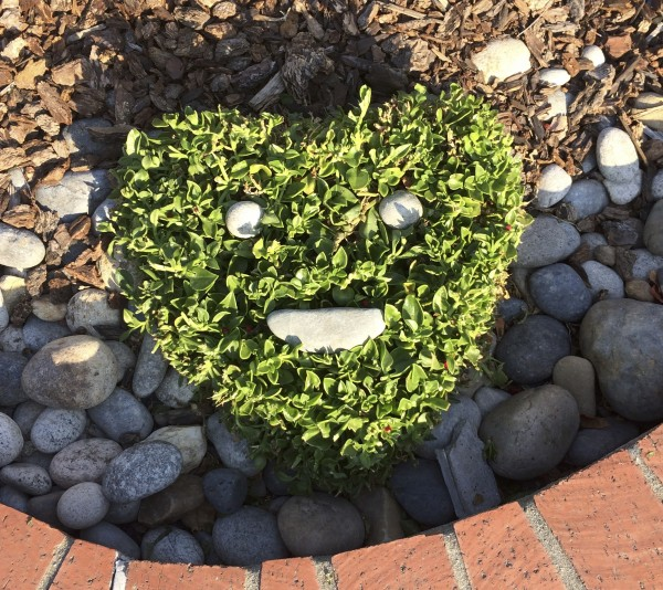 Heart-Shaped Shrub With Stones In The Shape Of A Face