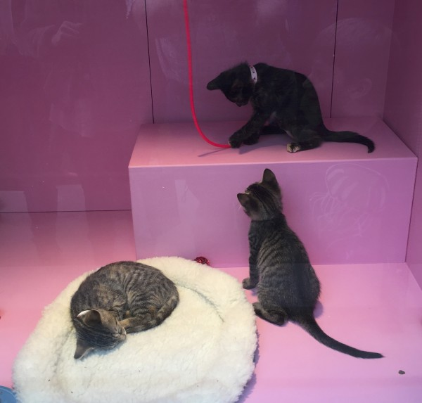 Three Little Kittens In The Window Of Macy's In San Francisco