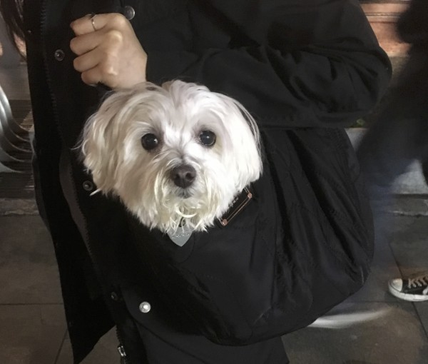 Doggie Bag: Woman's Bag With Dog Head Peeking Out
