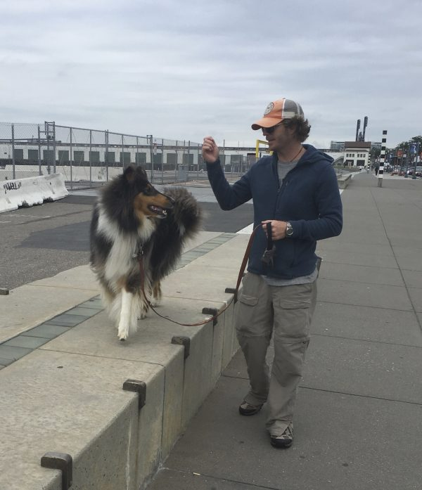 Man Walking Tricolor Collie On The Embarcadero In San Francisco