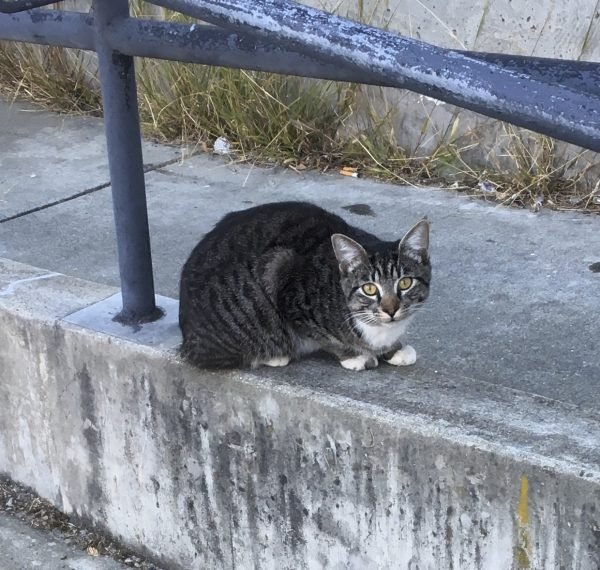 Cat Lying On Concrete