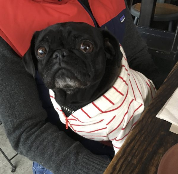 Black Pug In A Red And White Striped Hoodie