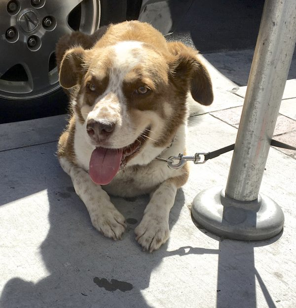 Unknown Mixed Breed Dog Lying On The Sidewalk And Grinning